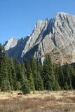 Montaña y bosque spruce, del claro Imagen de archivo libre de regalías