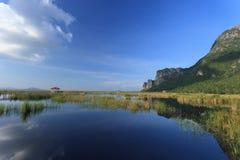 Montaña y reflexión en un lago con angustifolia del loto y de la Typha Imagen de archivo