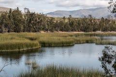 Montañas, árboles, Marsh Grass y lago fotografía de archivo