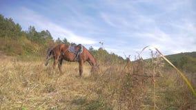 Montañas admitidas caballos rojos hermosos almacen de metraje de vídeo