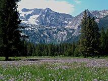 Montañas alpinas del prado y del diente de sierra cerca de Stanley, Idaho 7 Imagen de archivo libre de regalías