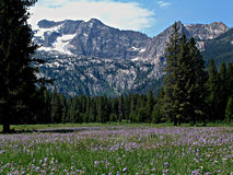 Montañas alpinas del prado y del diente de sierra cerca de Stanley, Idaho 8 Imagenes de archivo