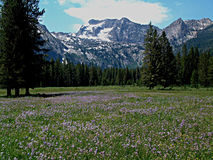 Montañas alpinas del prado y del diente de sierra cerca de Stanley, Idaho 9 Imagen de archivo