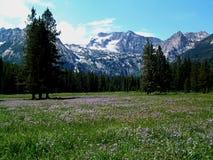 Montañas alpinas del prado y del diente de sierra cerca de Stanley, Idaho 4 Imagen de archivo