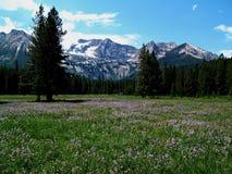 Montañas alpinas del prado y del diente de sierra cerca de Stanley, Idaho 5 Fotografía de archivo libre de regalías