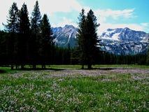 Montañas alpinas del prado y del diente de sierra cerca de Stanley, Idaho 6 Imagen de archivo