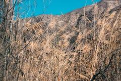 Montañas amarillas de las plantas en el fondo imagenes de archivo