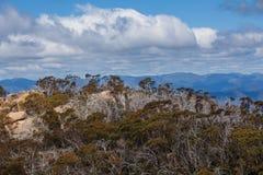 Montañas australianas y Bush nativo en el parque nacional del búfalo del soporte Imagen de archivo