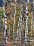 Montañas blancas de de New Hampshire Fotografía de archivo