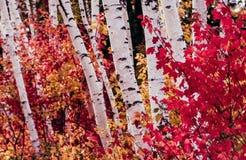 Montañas blancas, New Hampshire Fotos de archivo libres de regalías