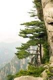 Montañas chinas, árbol de pino y la montaña Imagen de archivo libre de regalías