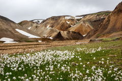 Montañas coloridas de Landmanallaugar, en la naturaleza Rese de Fajllabak Fotografía de archivo libre de regalías