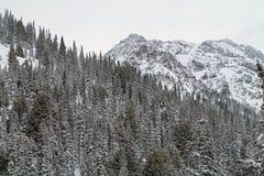 Montañas coronadas de nieve más allá de los árboles de hoja perenne Nevado Imagen de archivo libre de regalías