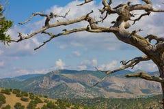 Montañas crimeas Fotografía de archivo