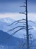Montañas de Adirondack en invierno foto de archivo libre de regalías