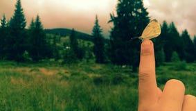 Montañas de Apuseni fotografía de archivo libre de regalías
