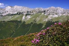 Montañas de Bucegi Imagen de archivo