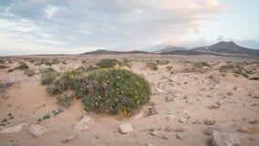 Montañas de Fuerteventura Fotografía de archivo
