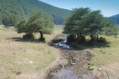 Montañas de Irpinia Italia Árboles Imagen de archivo