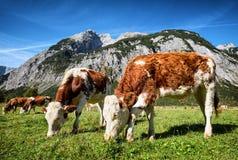 Montañas de Karwendel Fotos de archivo