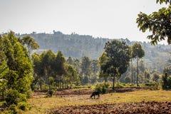 Montañas de Kisii imagen de archivo libre de regalías