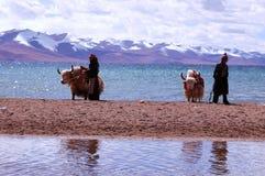 Montañas de la nieve de Tíbet Foto de archivo