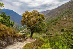 Montañas de la opinión del paisaje que caminan Himalaya Fondo hermoso de la estación de verano del final Foto horizontal Cielo nu Foto de archivo libre de regalías