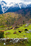 Montañas de la opinión del paisaje que caminan Himalaya Fondo hermoso de la estación de verano del final Foto vertical Cielo nubl Imagen de archivo libre de regalías