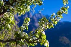 Montañas de la opinión del primer que caminan Himalaya Fondo hermoso de la estación de verano del final Foto horizontal Cielo nub Imagen de archivo