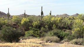 Montañas de la superstición, Arizona almacen de video