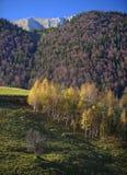 Montañas de Piatra Craiului del follaje del otoño Imágenes de archivo libres de regalías