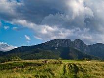 Montañas de Tatra de la tarde del verano, Polonia Foto de archivo