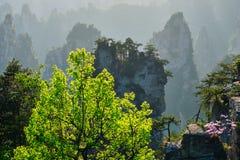 Montañas de Zhangjiajie, China foto de archivo libre de regalías