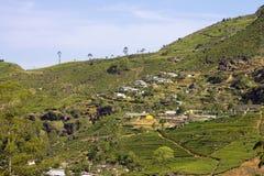 Montañas del jardín de té de Sri Lanka Imagen de archivo
