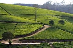 Montañas del jardín de té de Sri Lanka Fotos de archivo