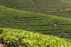 Montañas del jardín de té de Sri Lanka Imágenes de archivo libres de regalías