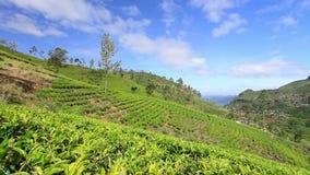 Montañas del jardín de té de Sri Lanka en eliya del nuwara metrajes