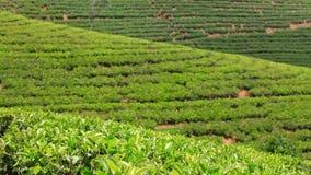 Montañas del jardín de té de Sri Lanka en eliya del nuwara almacen de video