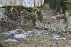 Montañas del musgo Fotos de archivo libres de regalías