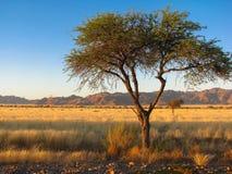 Montañas del namib de Namibia Imagen de archivo libre de regalías