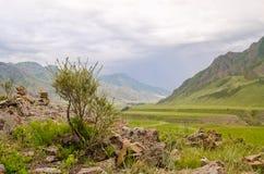 Montañas del verano con el árbol Paisaje del verde de Altai Foto de archivo libre de regalías