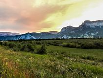 Montañas del verano y flores salvajes Foto de archivo