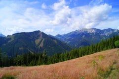 Montañas del verde azul con la hierba rosada Imagen de archivo libre de regalías