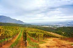 Montañas del viñedo en el valle Suráfrica de Stellenbosch imagen de archivo libre de regalías