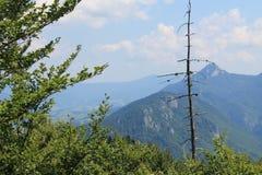 Montañas en Eslovaquia Mala Fatra Poco Fatra Montañas de Cárpatos Fotos de archivo