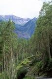 Montañas enmarcadas árbol Fotografía de archivo libre de regalías