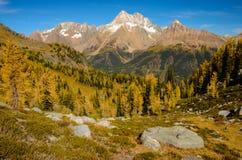 Montañas enormes de Purcell del paso del alerce de la caída imagen de archivo
