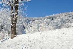 Montañas gigantes/Karkonosze, invierno de Karpacz fotos de archivo libres de regalías