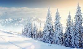 Montañas majestuosas del paisaje misterioso del invierno adentro Magica Imagen de archivo libre de regalías