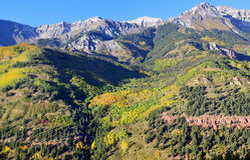 Montañas nevadas y álamo temblón amarillo Foto de archivo libre de regalías